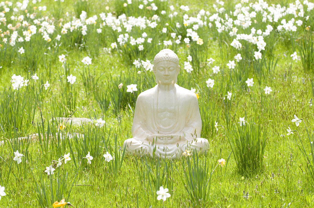 Buddha & Dandleions