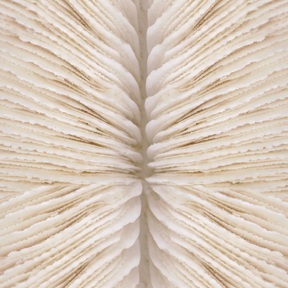 SB.spine shell