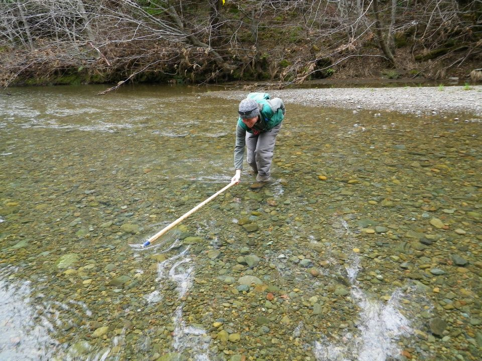 Measuring a salmon redd on the Garcia River