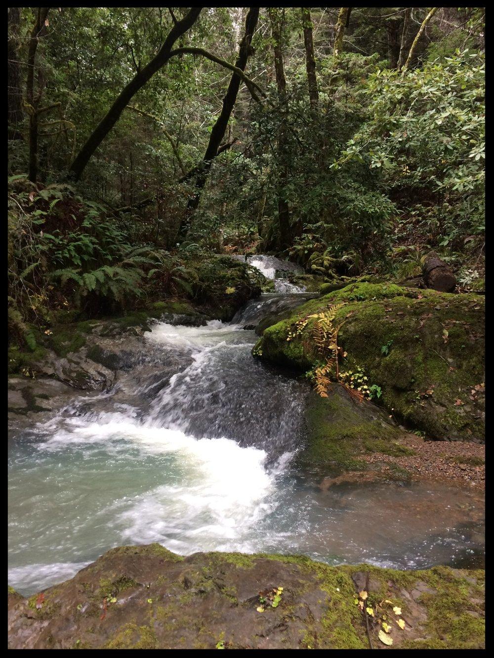 Brandon Gulch, Noyo River
