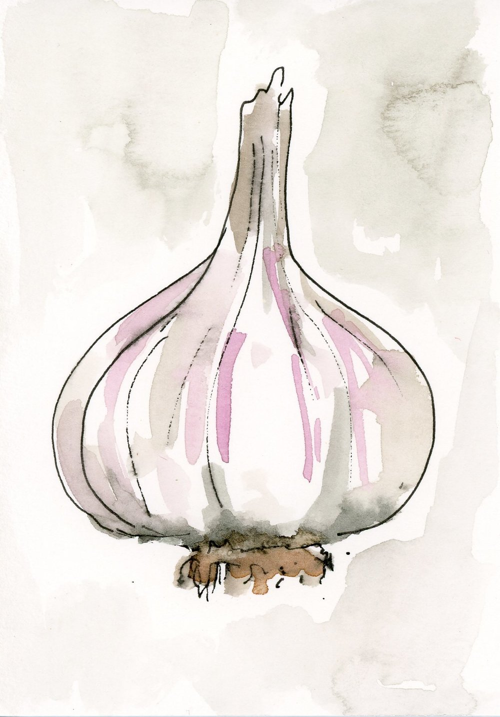 no. 234 Garlic