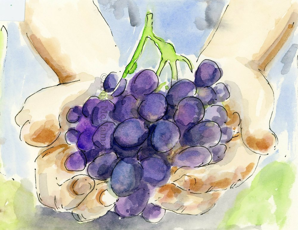 no. 256 Grapes
