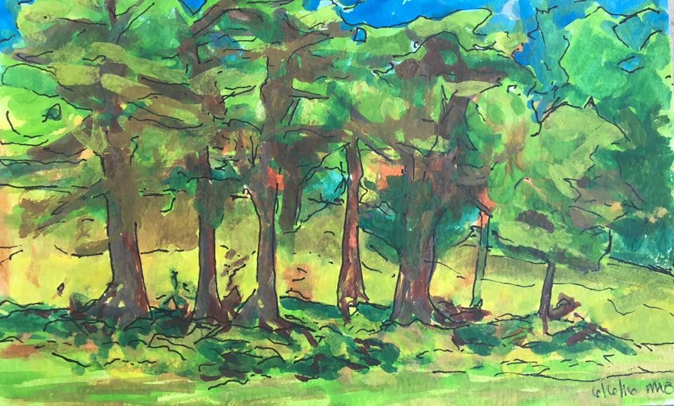 Trees by the gold course