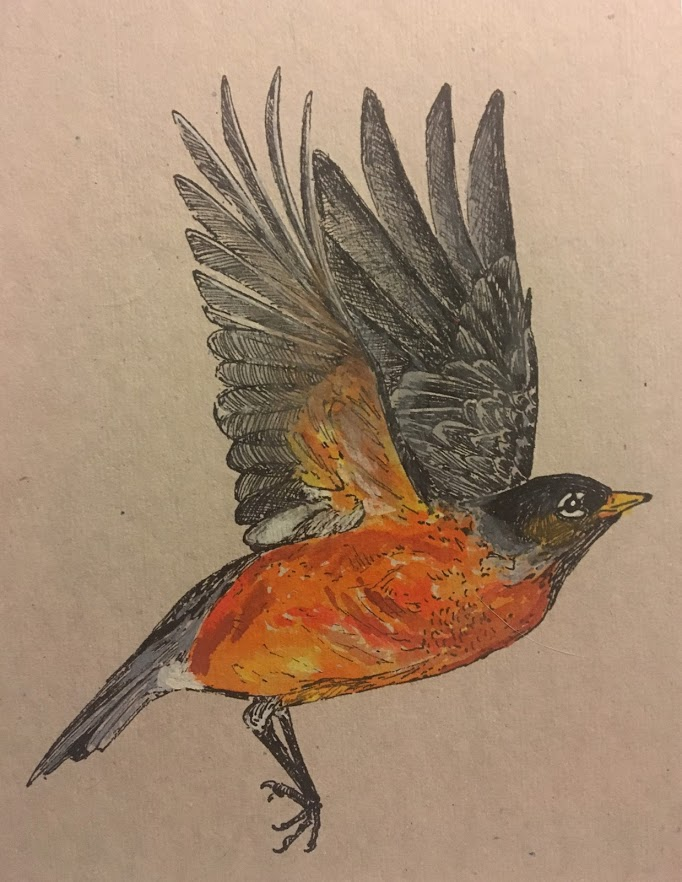 American Robin.JPG