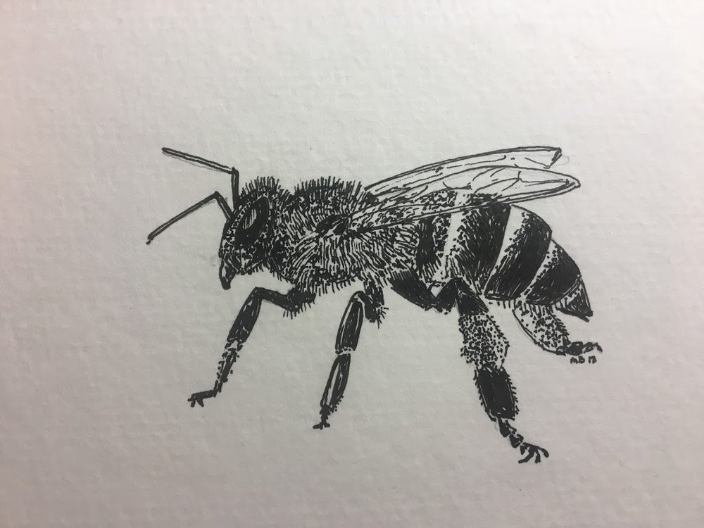 Honey Bee.JPG