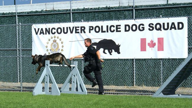 A VPD canine tests out the new obstacle course donated by BCIT.