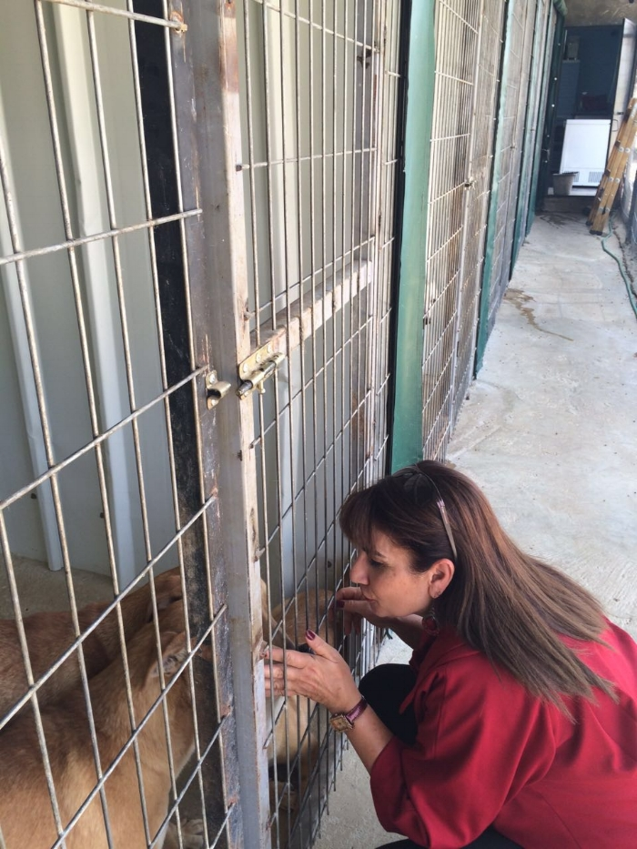 Diana petting some of the dogs of the Bethlehem Animal Shelter and Administration Unit (BASAU)