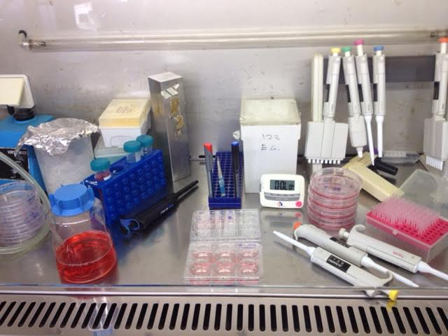 Image from interviewee's lab