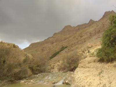nature5.jpeg
