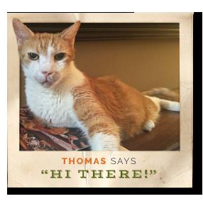 Thomas the cat open adoption