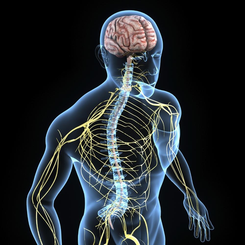 neuro system.jpg
