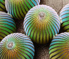 01-passilflora-egg-714.jpg