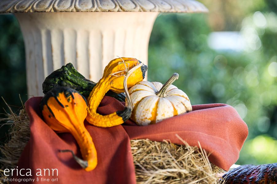 EricaAnnPhotography_GeraniumLake_Autumn-103.jpg