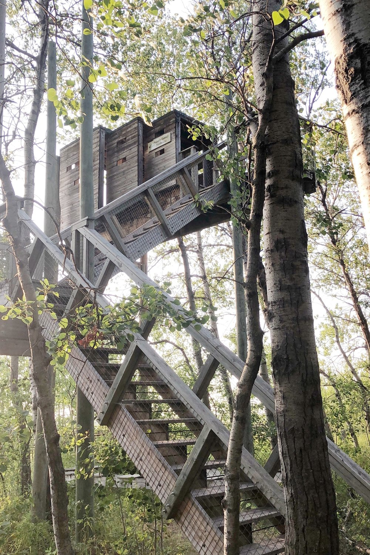 FortWhyte-treehouse.JPG