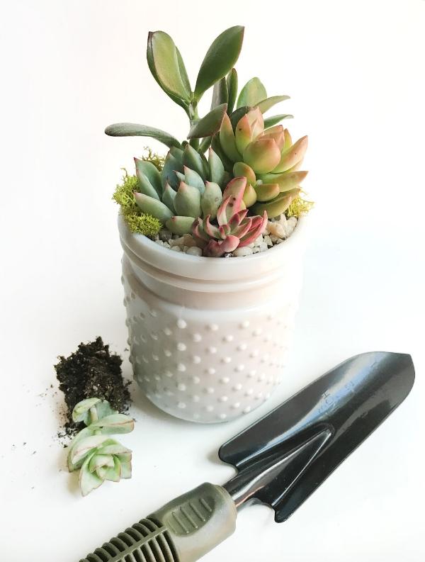 White Hobnail Succulent Arrangement.jpg