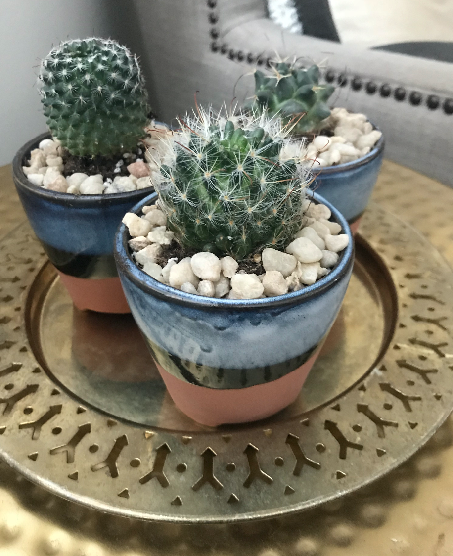 Mini Cactus Arrangement.png