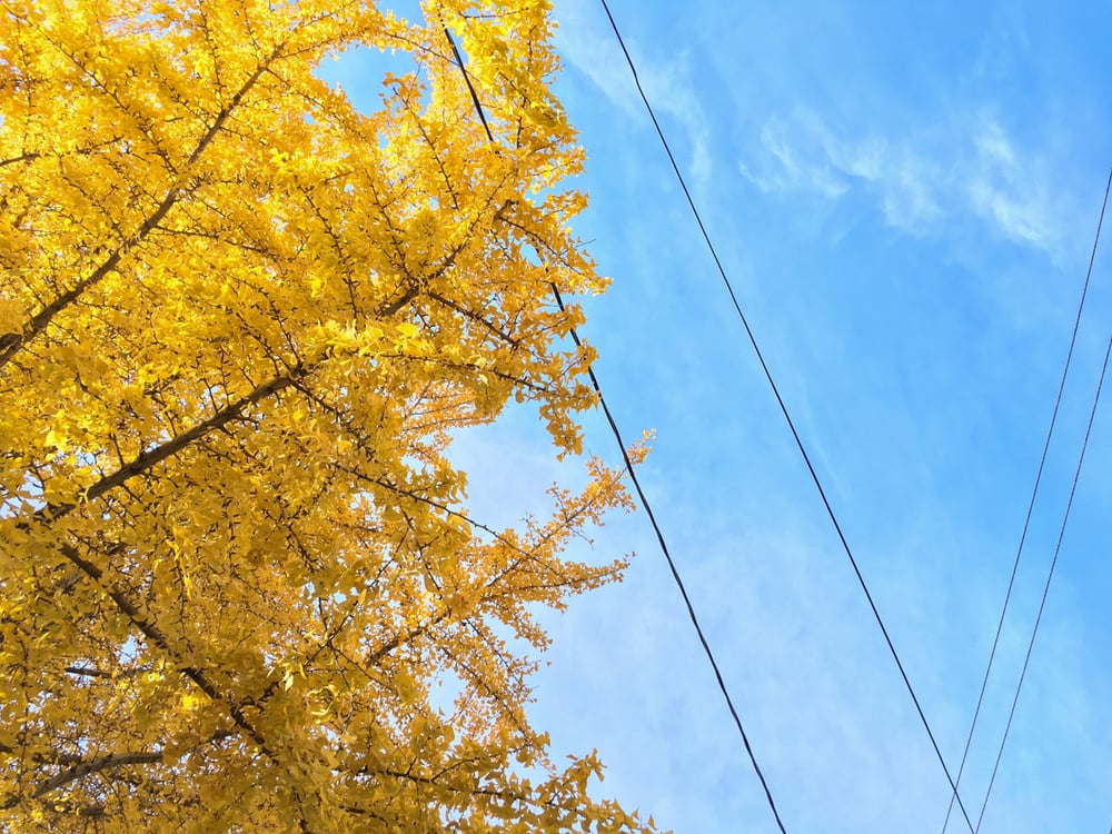 color06.jpg