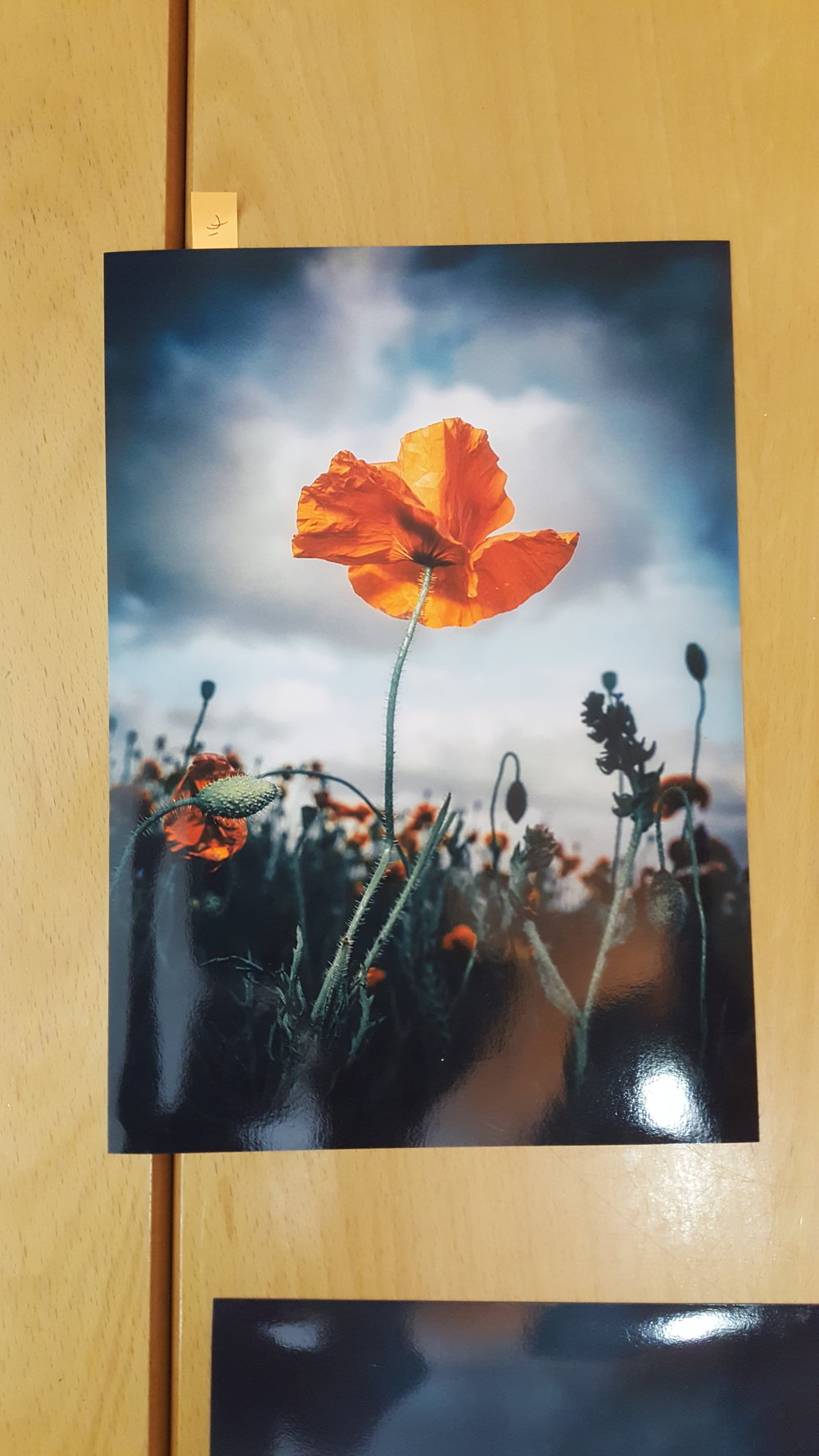 2 Tim Gilbert - Poppy