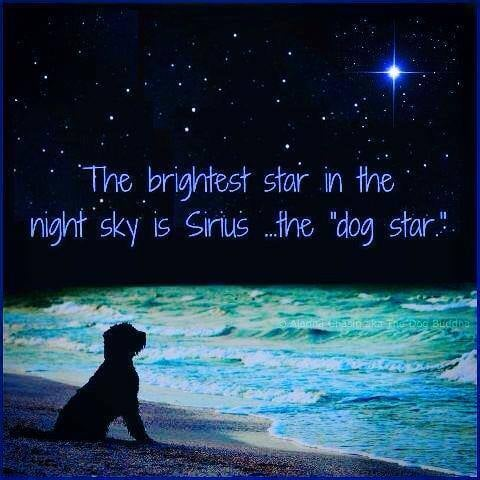sirius dog star brightest star.jpg