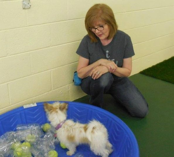 deborah encouraging a puppy client to play during enrichment.