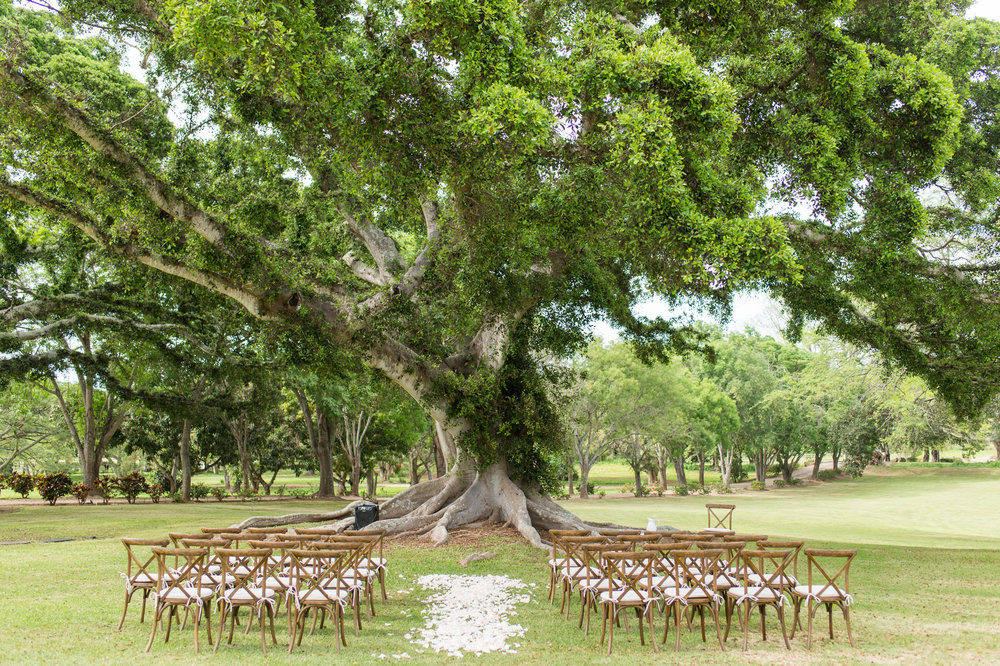 Hawaii Wedding_Dillingham Ranch_Tree