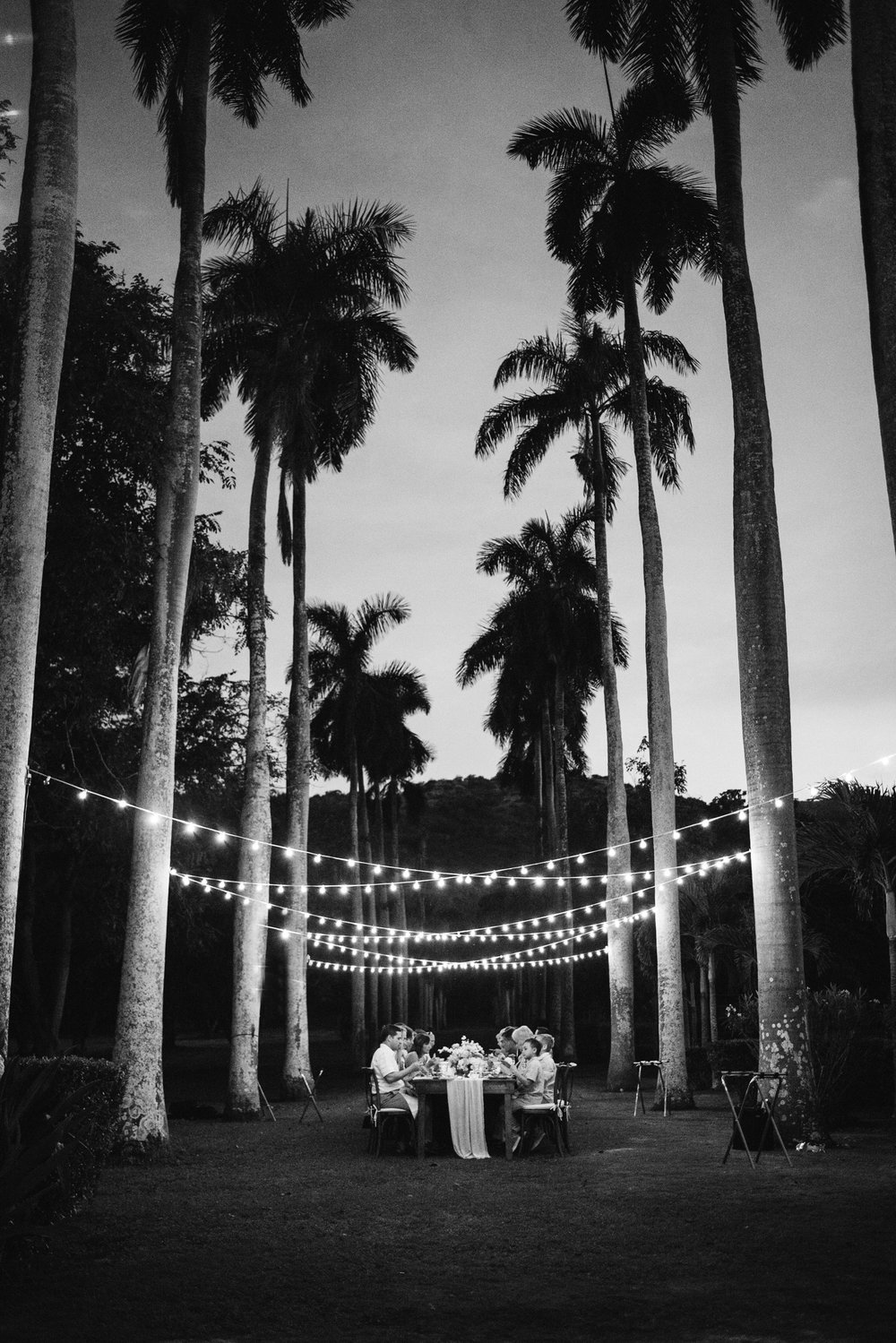 Hawaii Wedding_Dillingham Ranch_Reception_Palm Trees
