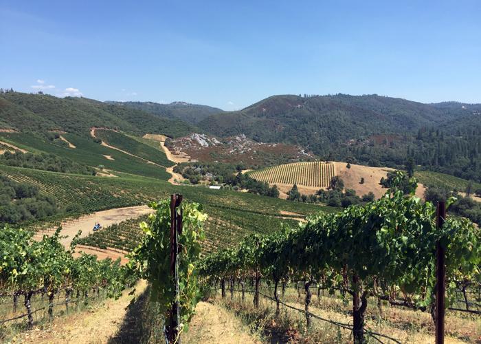 Forlorn Hope Vineyards