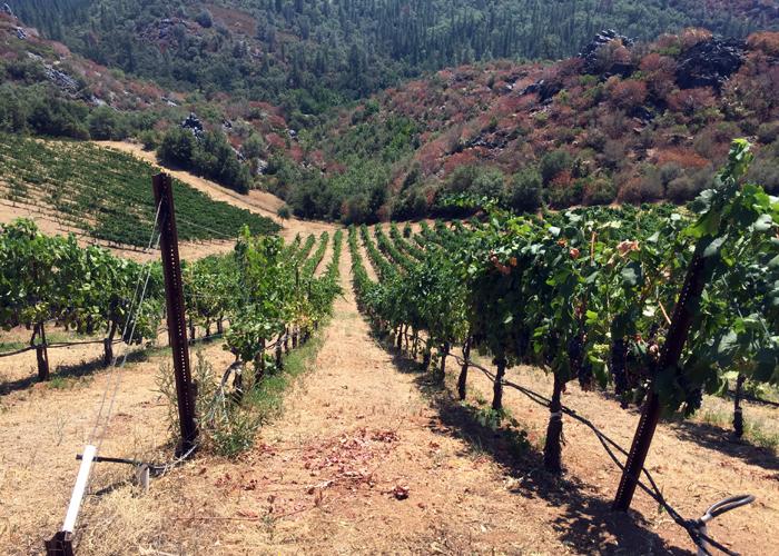 Forlorn Hope vineyards Sierra Foothills Calaveras County, California