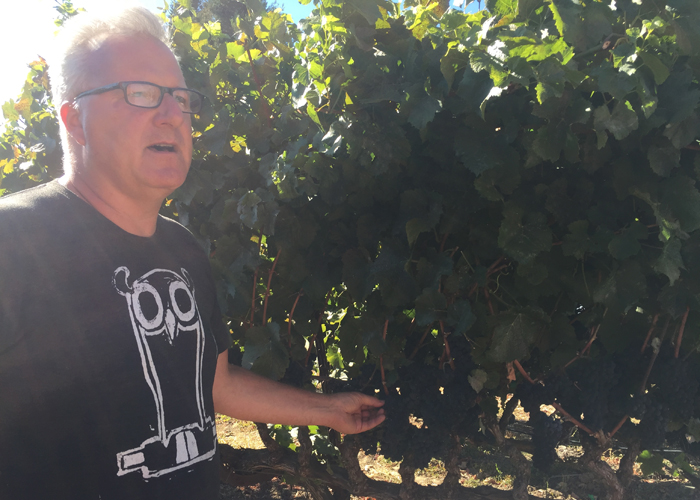 Winemaker Abe Schoener in the Tenbrink pinot noir vineyard adjacent to the building where he makes wine under the Scholium Project  label .