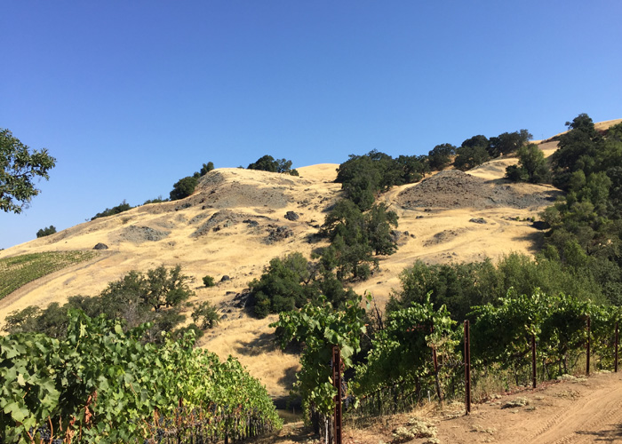The Healdsburg-Rogers Creek fault line