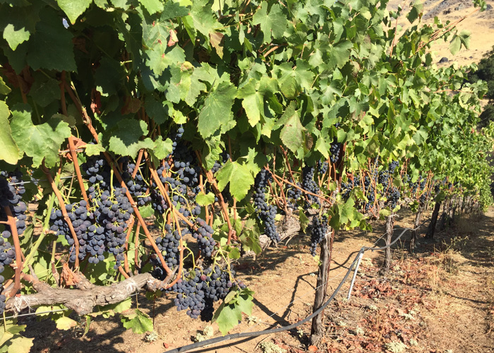 Rockpile AVA Mauritson Family Vineyards cabernet