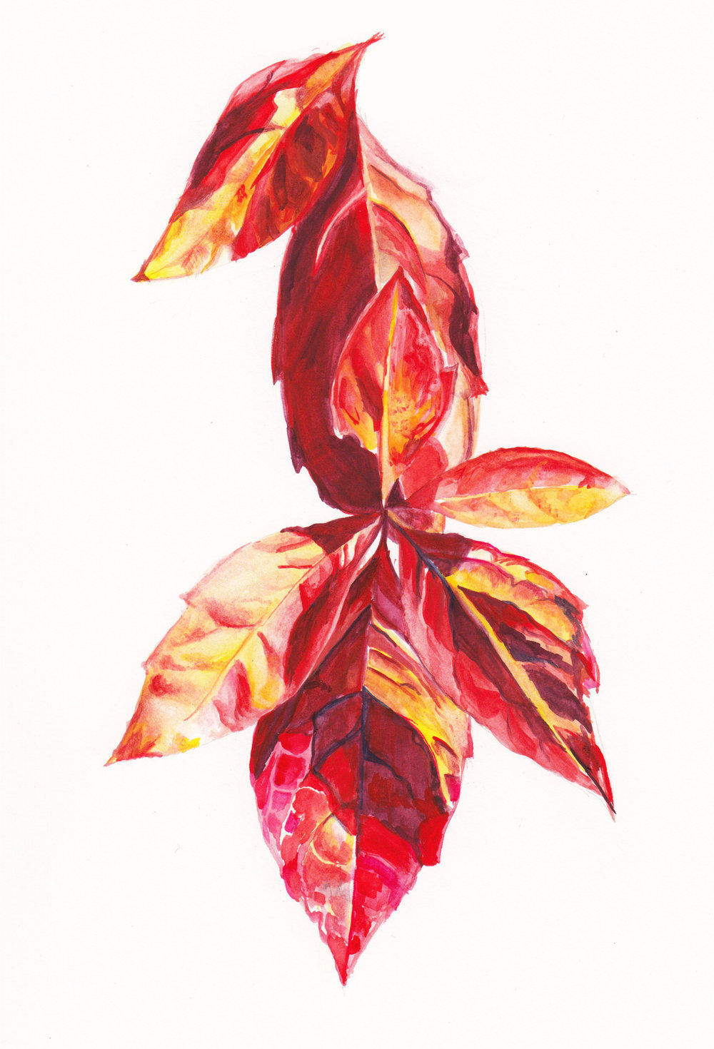Fall Ivy.jpg