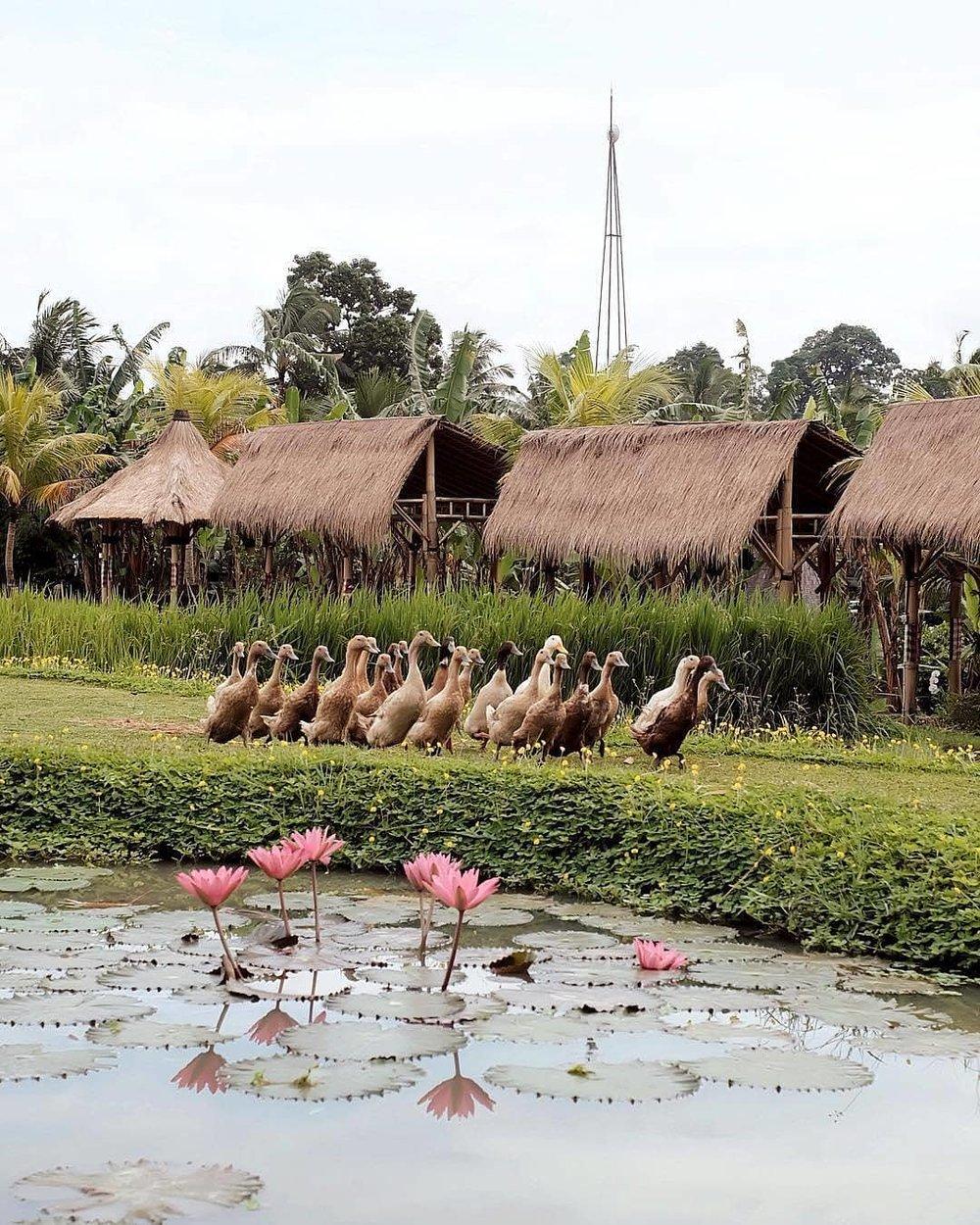 2 Well Travelled Bride Honeymoon Resort Desa Visesa Ubud.jpg