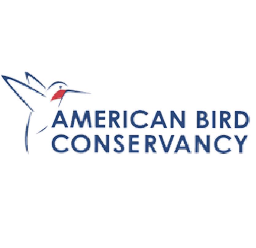AmericanBird-03.jpg