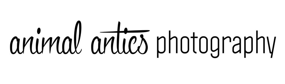 Animal Antics Photography