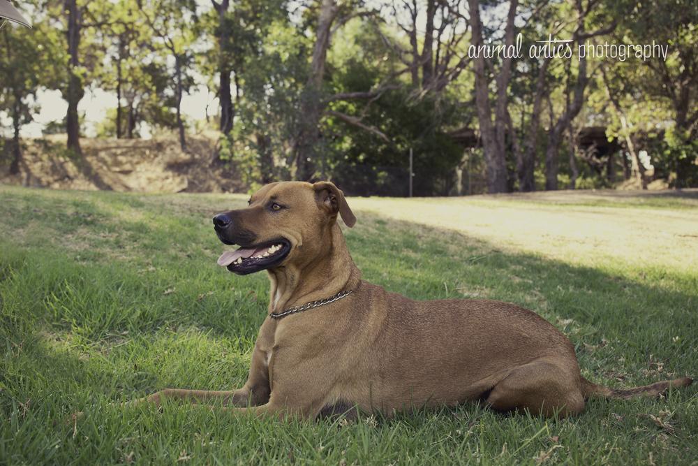 Animal Antics Photography in Perth, Pet Photographer