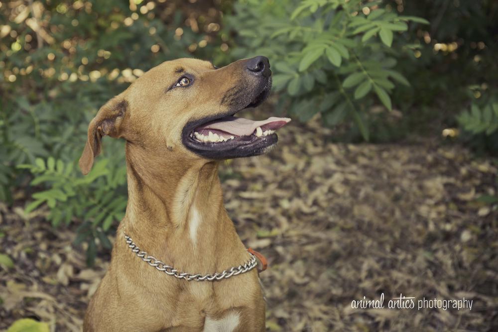 Pet Photographer Perth, Animal Antics Photography
