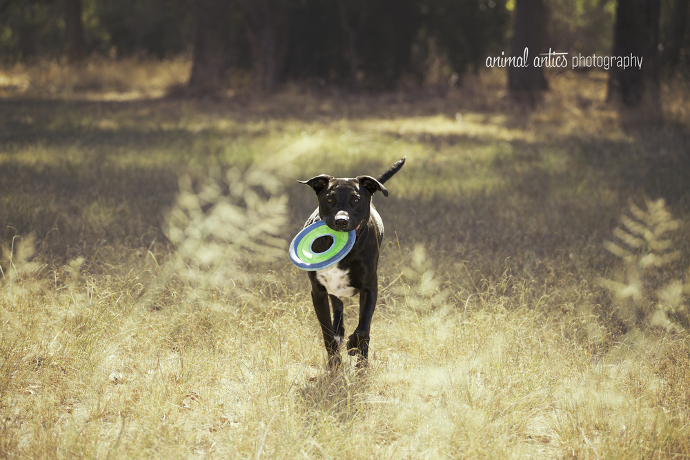 Billie - Outdoor Portrait Photography in Perth, Western Australia with Animal Antics Photography
