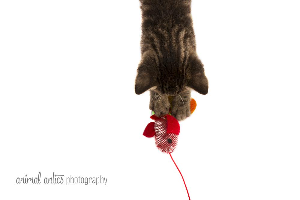 Animal Antics Photography - Pet Portraits in Perth