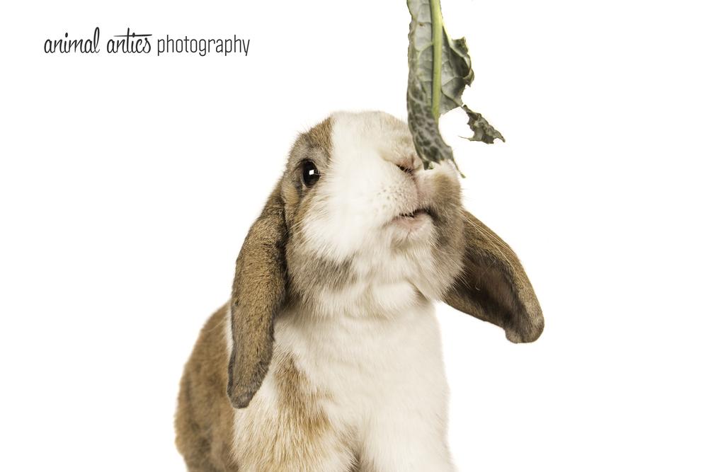 Animal Antics Photography in Perth