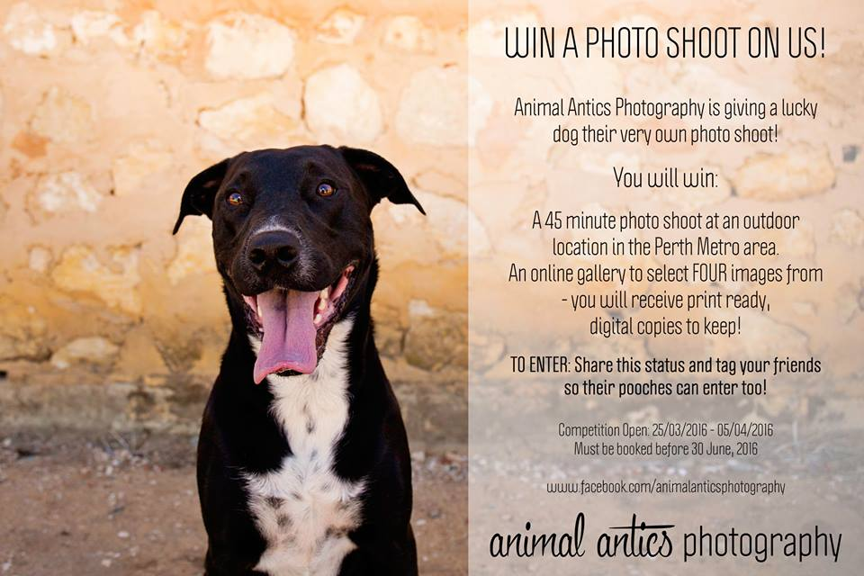 Pet Photography Perth with Animal Antics Photography March 2016 Competition