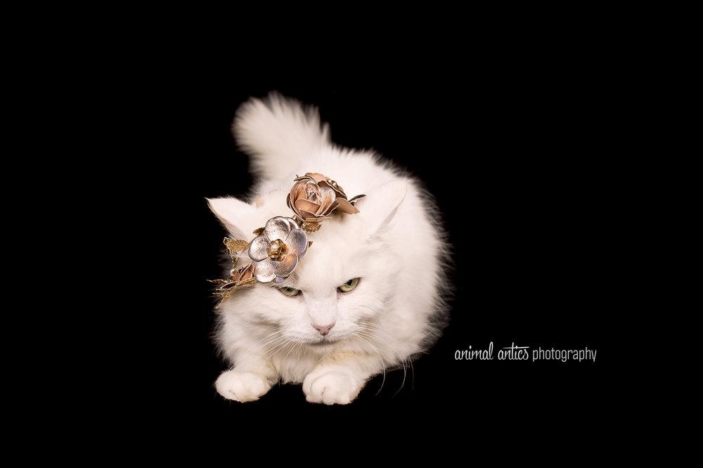 Princess 004.jpg