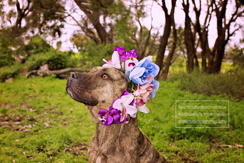 TESSA BLOOMING STAFFY SHOOT PERTH 2 WEB.jpg