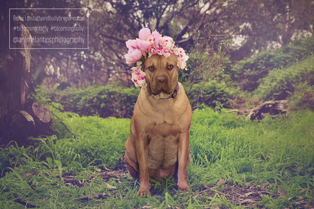 BETSY BLOOMING STAFFY SHOOT PERTH 4 WEB.jpg