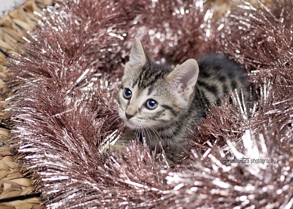 Tiger Lily 001.jpg