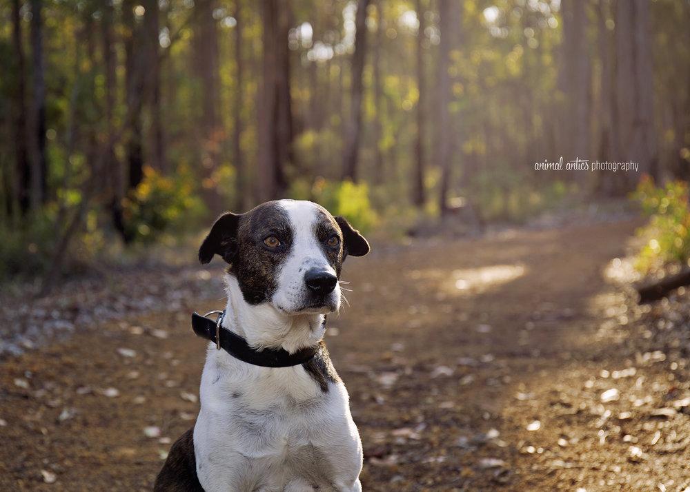 Rufus 014 WEB.jpg