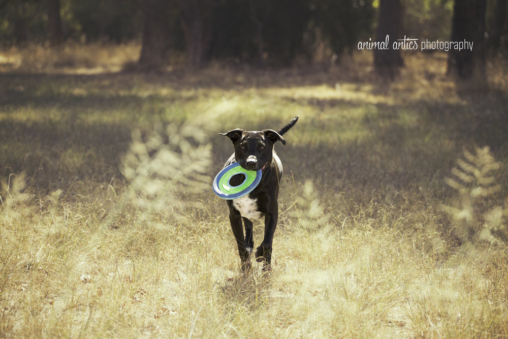 Billie+-+Outdoor+Portrait+Photography+in+Perth,+Western+Australia+with+Animal+Antics+Photography.jpg