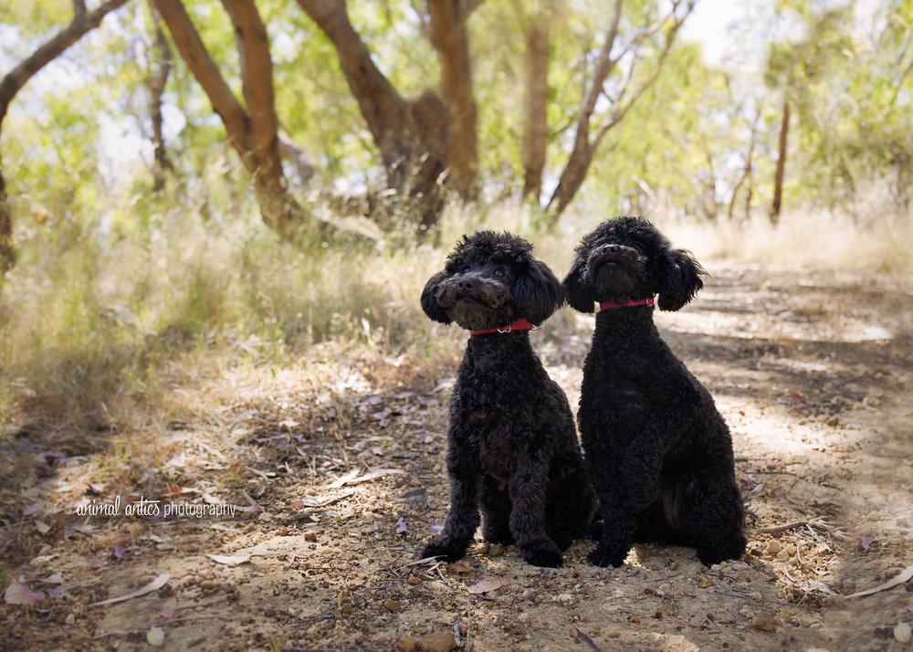 Lucy and Lyla 006 WEB.jpg