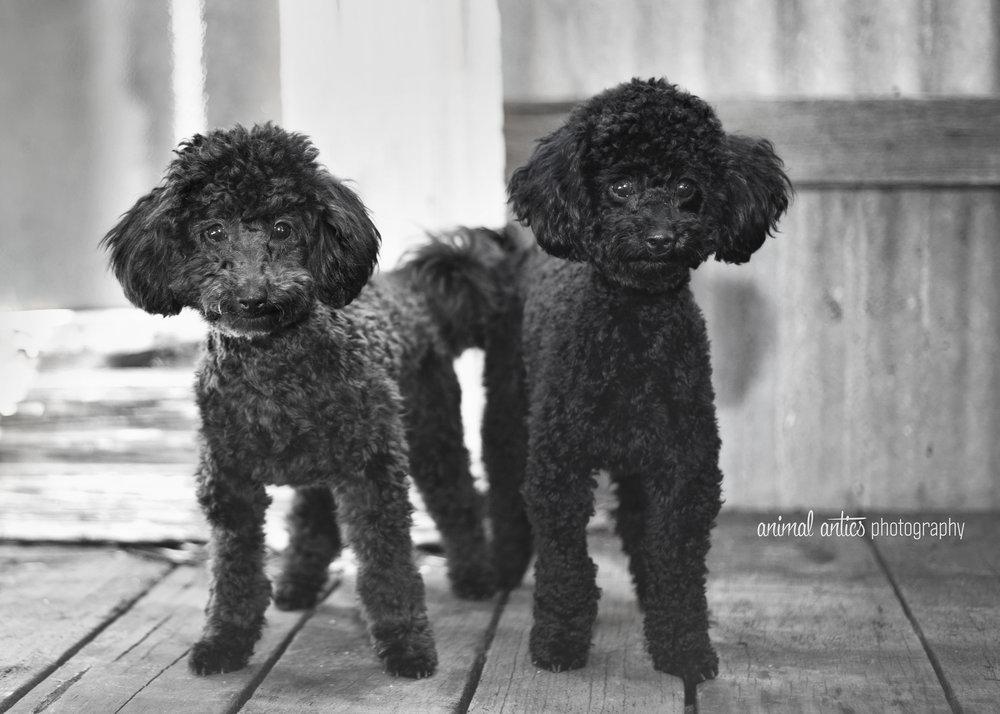 Lucy and Lyla 008 WEB.jpg