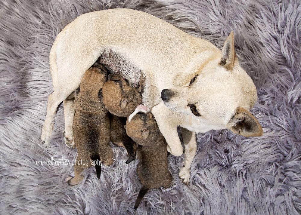 Rosie Pups 002 WEB.jpg